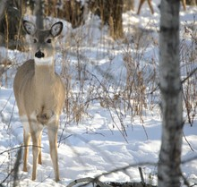 Deer Feeding And Active Different Season