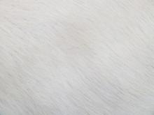 Natural Animal Fur Background ...