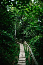 The Wooden Path In The Forest Leads. Journey Ahead. Quiet Lane. Wood Plank Walkway  Through Woods. Place For Text.