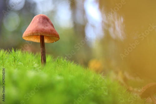 Fotomural  Mushroom in the moss on a green background in the autumn forest