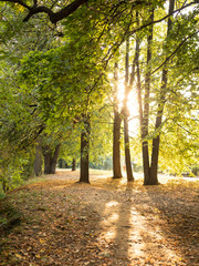 Sunlight shining through trees in autumn park