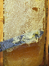 Wax Sealed Bee Frame With Hone...