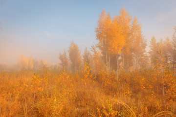 Panel Szklany 3D Beautiful autumn misty morning landscape. Yellow trees and high grass at scenic meadow.