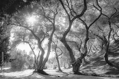 Obrazy czarno białe  zaciekawienie