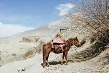 Horse In Mountain Landscape