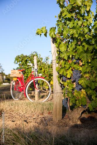 Photo sur Aluminium Graffiti collage Vieux vélo rouge dans les vignes