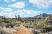 Desert Scenes From Cave Creek,...