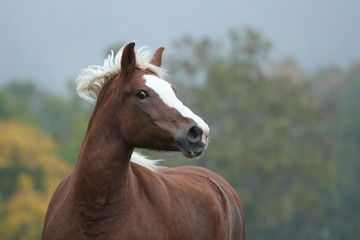 Pferd im Herbst - mystisch