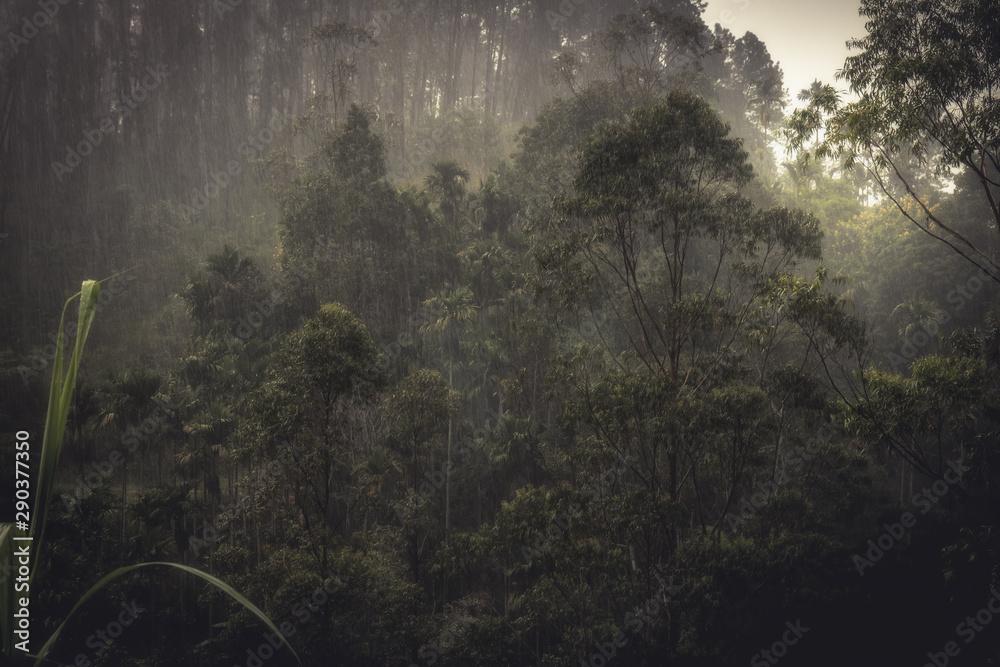 Fototapeta Raining forest tropical landscape during tropical rain