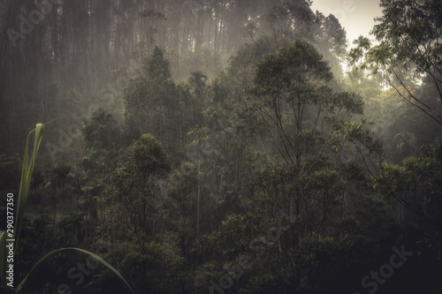 Foto auf Leinwand Grau Raining forest tropical landscape during tropical rain