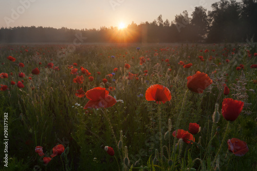 Sunrise over the meadows, Kuleszowka, Piaseczno, Mazowsze, Poland - 290377582
