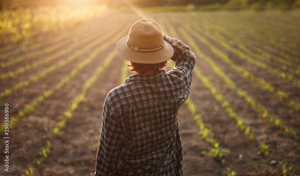 Fototapeta Anonymous farmer looking at crops