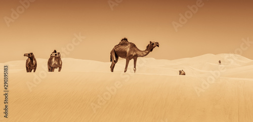 Fotobehang Kameel the caravan of camels through the desert