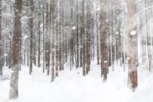 Winter Landscape. Forest Under...