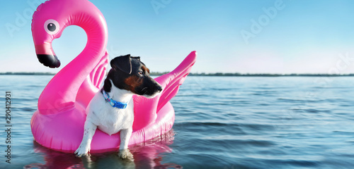 Wide banner with a jack russel dog swimming on the rubber pink flamingo