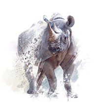 Black Rhinoceros Watercolor On...