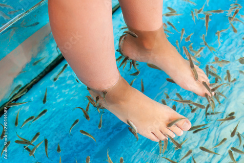 Doctor fish cleaning feet in a spa