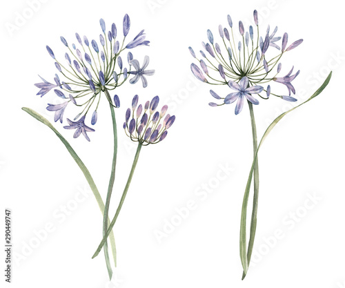 Watercolor allium flower illustration Wallpaper Mural