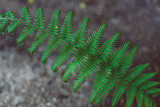 close-up shot of green fern leaf