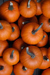 canvas print picture Many pumpkins background