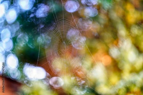 Fototapeten Natur Natuur herfst ochtend douw