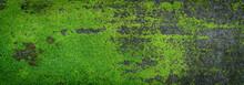 Moss Green Texture. Moss Backg...