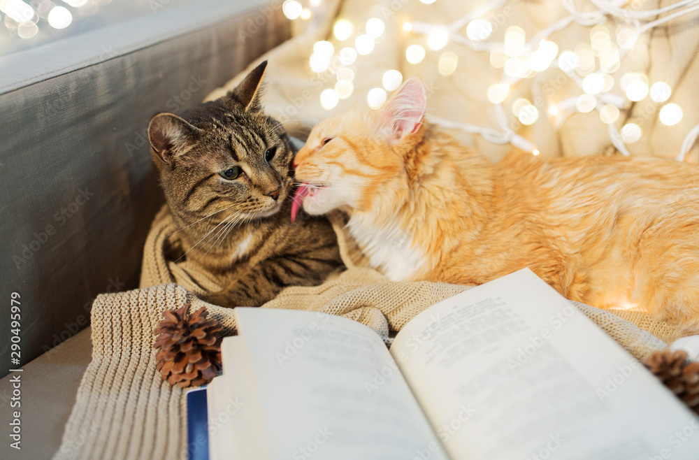 Fototapety, obrazy: pets, christmas and hygge concept - two cats lying on sofa with book at home in winter
