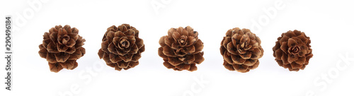 Fototapeta  Pine cone isolated on white background