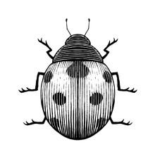 Ink Sketch Of A Ladybug