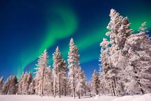 Northern Lights Snowy Trees La...