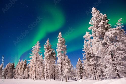 Foto op Plexiglas Noorderlicht Northern lights snowy trees landscape, Aurora Borealis in Lapland, Finland