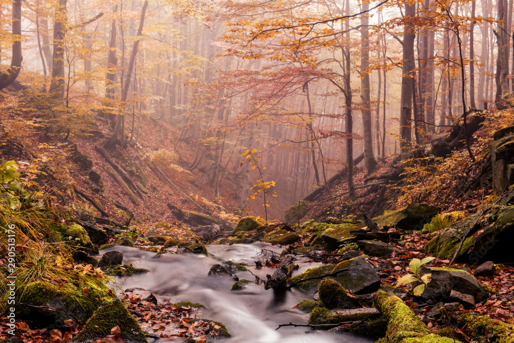 Fototapety, obrazy: Small river stream in the autumn foggy forest.  Beautiful autumn landscape. Long exposure.