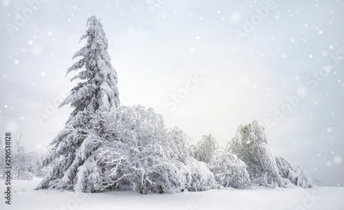 Landscape - snowy trees on the mountain Canvas Print