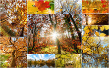 Autumn Nature Collage With Dif...