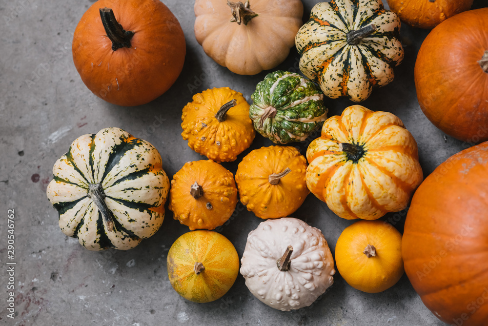 Fototapety, obrazy: Different kinds of pumpkins. Autumn and Halloween background