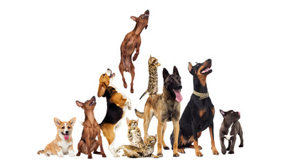 group of animals looking up...