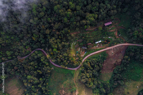 Road in green tree forest landscape vehicle movement