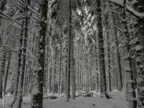 Tuinposter Berkbosje Snowy winter forest, a lot of snow