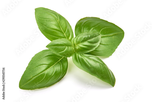 Cuadros en Lienzo  Sweet basil herb leaves, isolated on white background
