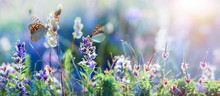 Wild Flowers And Grass Closeup, Horizontal Panorama Photo