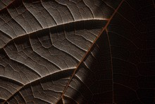 Closeup Shot Of Leaves