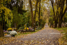 Autumnal Aisle Path In The Cem...