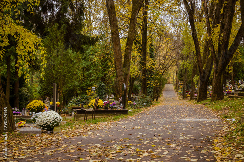 autumnal aisle path in the cemetery Canvas Print