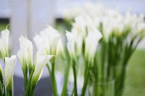 Beautiful White Calla Lily Flower. wedding decor Canvas Print