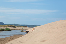 Girl And Dog On Sand Dune
