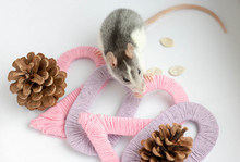 Gray Rat In A New Year's Decor. Symbol Of The Year 2020 Is A Rat.