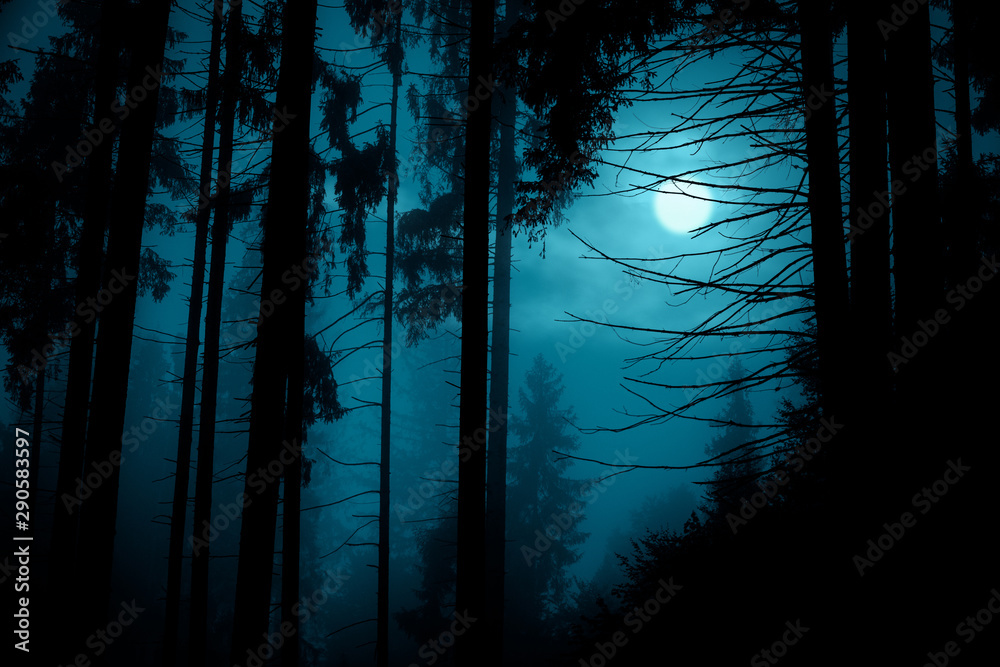 Fototapeta Full moon through the spruce trees in magic mystery night forest. Halloween backdrop.