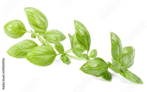 Fototapeta  sweet basil herb leaves isolated on white background