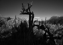 Grayscale Photography Of Leafless Tree Over The Plants