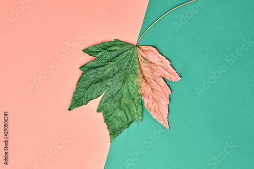 Fall fashion minimal. Maple Leaf, Trendy pastel autumn background, creative Flat lay. Autumnal coral mint design color, fashionable art Style. Creative shopping sale concept